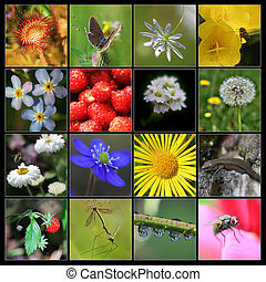 Collage of nature made from 16 pictures