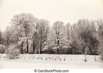 Beautiful views of Canadian winter forest in the snow at...