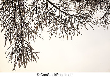 Beautiful views of Russian winter forest in the snow at...