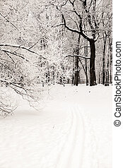 The footprint of the skis on the snow in winter forest at...