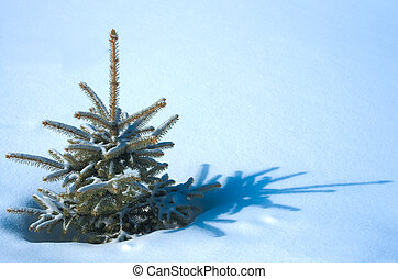 Live natural fur-tree on snow - Live natural fur-tree in the...