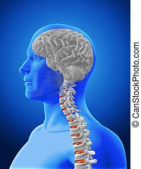 3D medical image showing spine and brain in male figure - 3D...