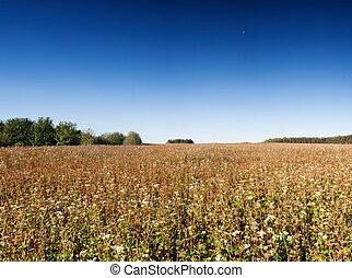 Field landscape, stubble field on polish countryside