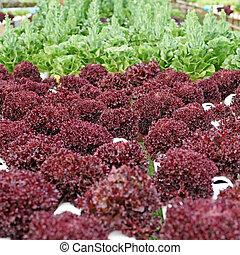 organique, hydroponic, légume,