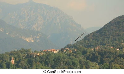 Flying Seagull Background Mountains
