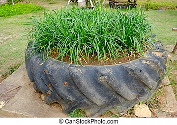 Plants Growing In Old Used Tyres