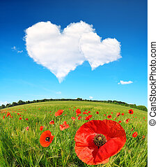 Valentines day. - Red poppies in wheat field and blue sky...