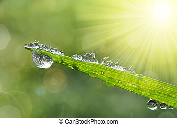 Frozen drops of dew on grass - Frozen drops of dew on the...