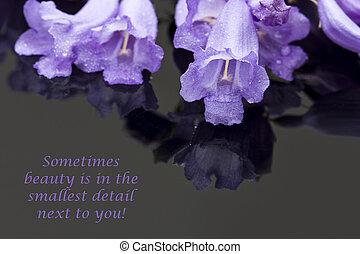 Jacaranda, flores, macro, en, Un, brillante, superficie,