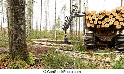Machine with robotic arm lifts trunks in forest - View on...