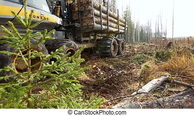 Truck laden with logs moves through forest - View on truck...