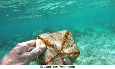 scuba diver holding a starfish in tropical sea.Travel...