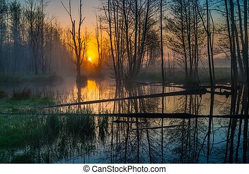 Beautiful sunrise over foggy wetlands