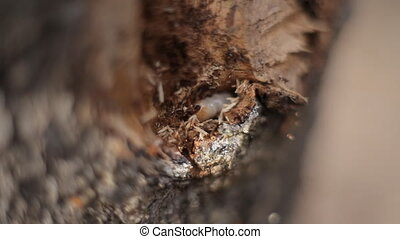 maggot gnaws the bark of a tree - close up of larva in tree