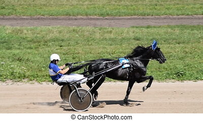 Horse at gallop on race track - Cart jockey with black horse...