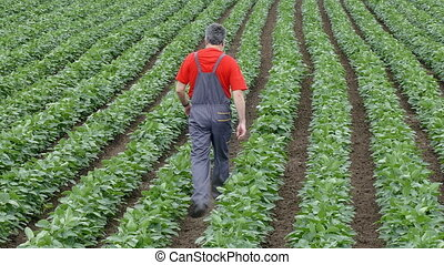 Farmer in soybean field - Agriculture, farmer or agronomist...