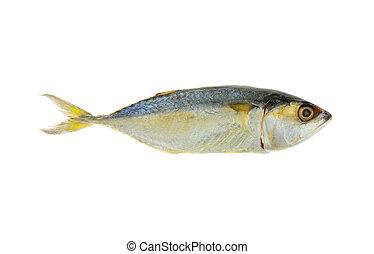 Mackerel or Aji isolated on white background ( Japanese...