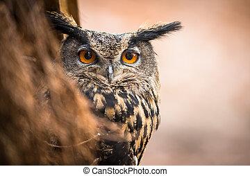 Closeup of a Eurasian Eagle-Owl Bubo bubo