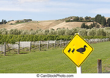 Ducks crossing - Road sign next to a vineyard with duck and...