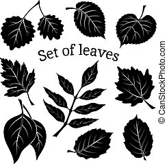 Leaves of Plants Pictogram Set - Set of Pictograms, Plant...