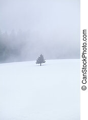 single tree on snow in fog - single tree on snow in dense...