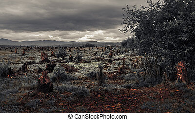 Madagascar - Stumps on the valley caused by deforestation...