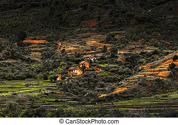 Madagascar - Houses on the hill with green gardens and red...