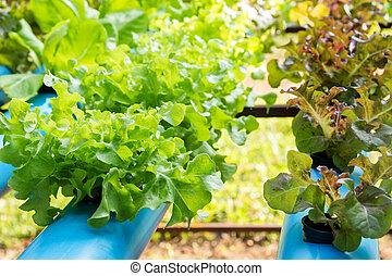 蔬菜, 農場, 營養液培養