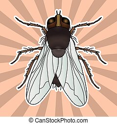 Insect anatomy. Sticker fly. Musca domestica.. Insect. a...