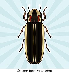 Insect anatomy. Sticker Firefly beetle Lampyridae. photinus...
