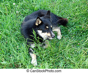 Grass dog 1 - A generic dog on grass