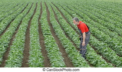 Farmer in soybean field