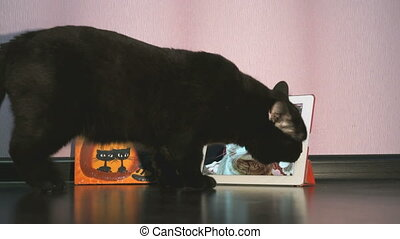 Black cat talking to a cat using digital tablet in white...