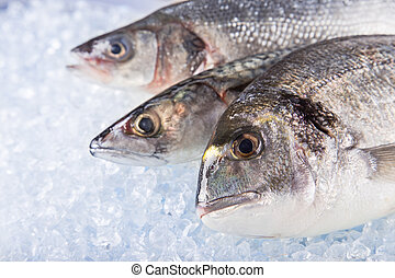 Fresh sea fishes on crushed ice - Fresh sea fishes on...