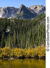Golden Brush Along Fern Lake Vertical