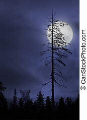 dry tree on dark sky with moon - Silhouette of dry bare tree...