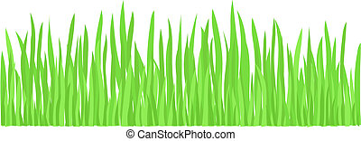 Green Grass vector - Young Fresh Green Grass