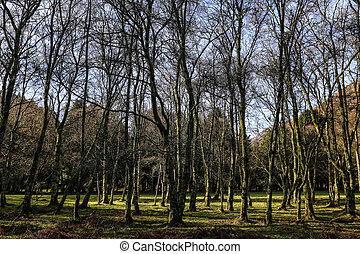 Bare trees planted on a sunny patch of green grass in...
