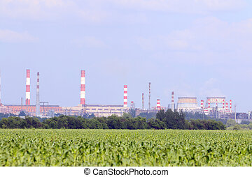 Green field with corn and big Oil Refinery with pipes on...