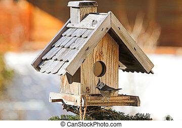 europeo, crested, Teta, pájaro, en, el, de madera,...