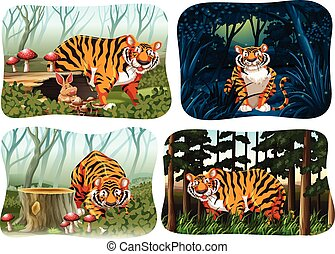 Four scene of tiger living in the forest illustration