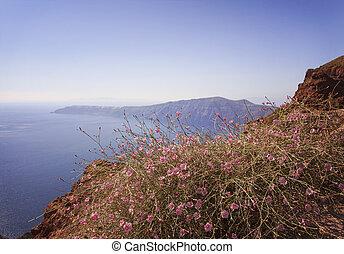 Santorini hillside flowers