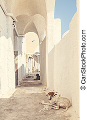 Backstreet dogs - Image of dogs resting in the shade on a...