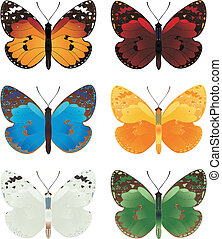 The beautiful butterflies of six different colours.