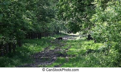 deer grazing in forest