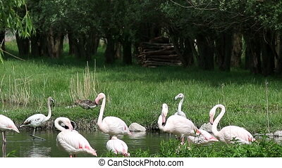 flamingos nature wildlife