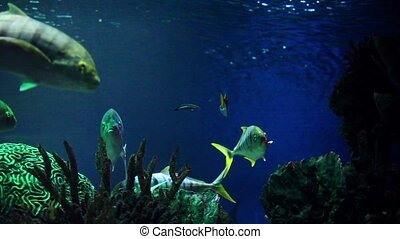 Cat sharks in the Blue Water - shark a dangerous marine...
