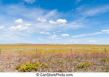 Arizona countryside field yellow rabbit brush flower blue...