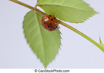 Close up of lady bug on plant