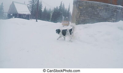 Stray dog in snows - Shaggy dog in snow is suitable into...